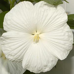 Jen's Flowers