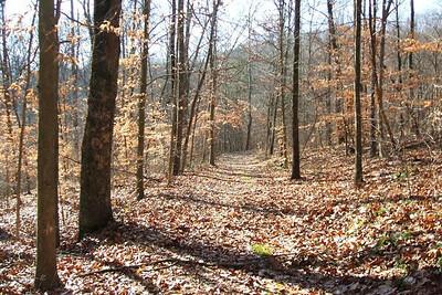 Yellow Trail