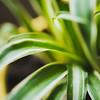 plants-11
