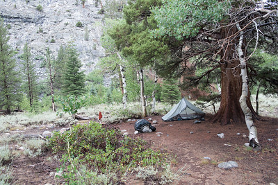 In a downpour, I pitched my tent under this giant tree because it was the only semi-dry spot I could find.  In the morning, almost everything I owned was wet except my sleeping bag.