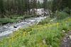 Flowers along a swollen Evolution Creek