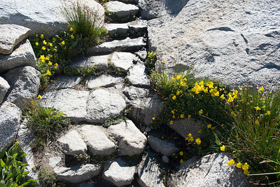 Flowers everywhere, including in the cracks of trail