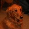 Annie Oakley, Jake's Dog
