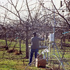 Michael McChesney checks the air flow rate on the air samples.  Air samples were taken to check for the exposure of red tail hawks to four organophosphate dormant spray pesticides on orchards.  Near Modesto CA, 1990