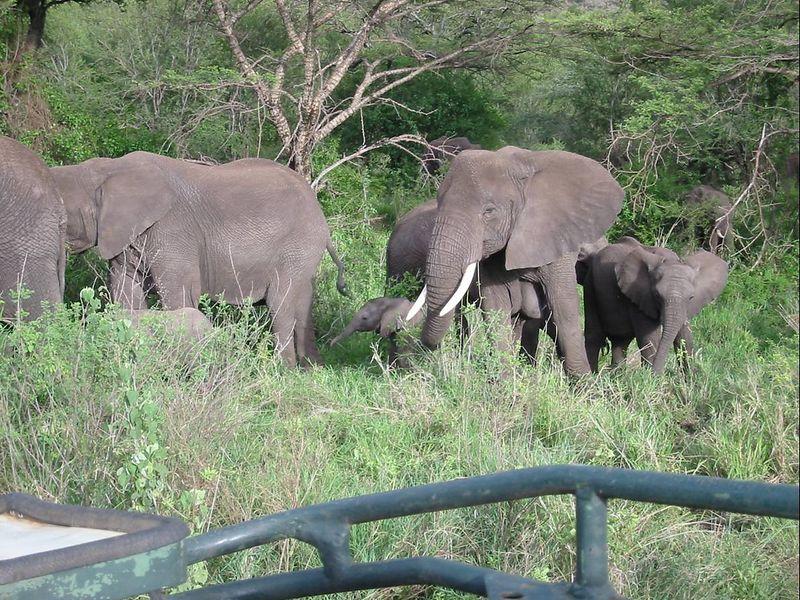 21_elephant herd