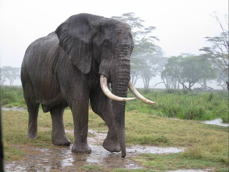 16_NgCrater Bull Elephant 2