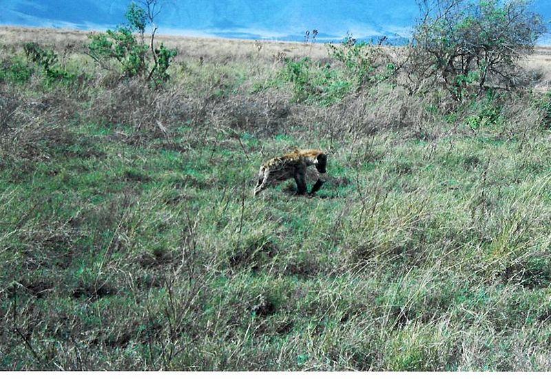 12_NgCrater Hyena