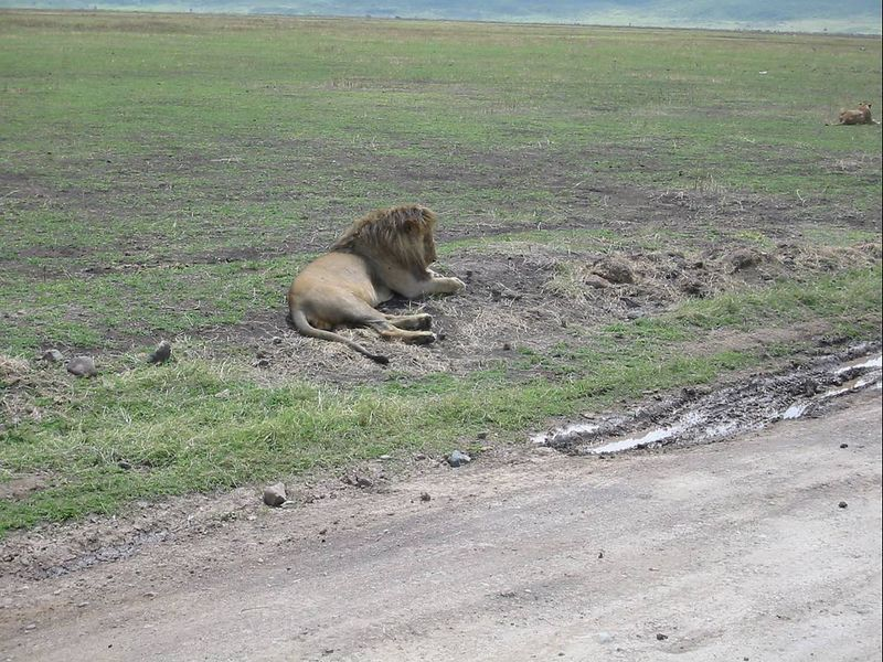14_NgCrater Lion Nap