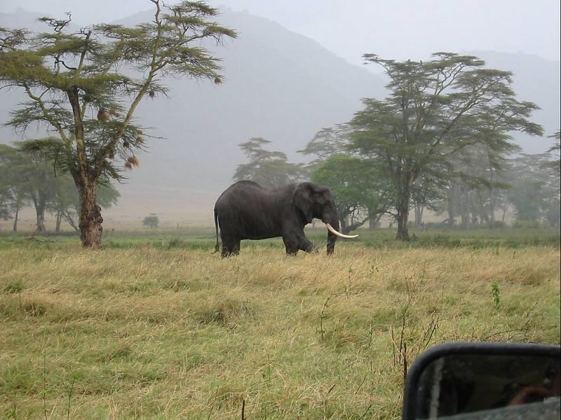 15_NgCrater Bull Elephant 1