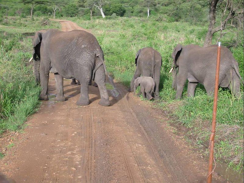22_elephant herd
