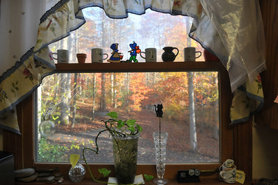 Judy's kitchen window looking a the leaves.