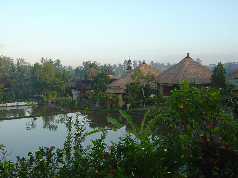 more early morning pics over rice paddies at the Bintang Pesona (our last night's posh accomm in SE Asia)