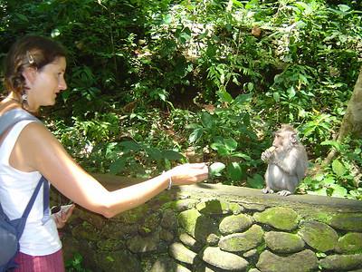 feeding the monkeys at the Mandaal Wisata Wenara Wana (Monkey forest sanctuary)