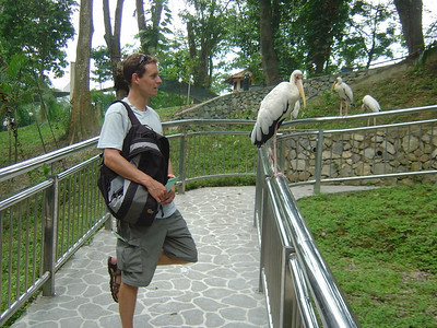 KL bird park-stork the pose!