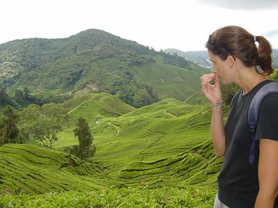 smelling a tea leaf while overlooking tea plantations at the Sungai Palas Boh Tea Plantation