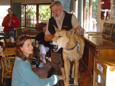 Dinky the singing dingo at Stuart's well...start of our 3 day central Australia tour