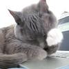 Jules on Laptop