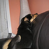 And ... Mason decided to sleep vertically on the couch. Do what?