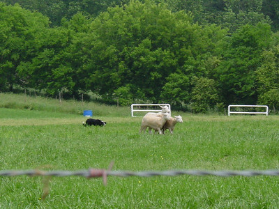2005 5.15 Dog Trials at Cagle's Dairy
