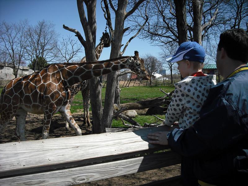 Looking at giraffes