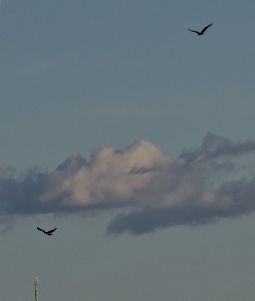 Even a couple of Ospreys came to the reception but unfortunately they had to fly off early.