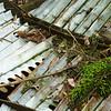 Junk Grown Moss