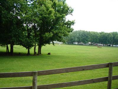 More horses!!