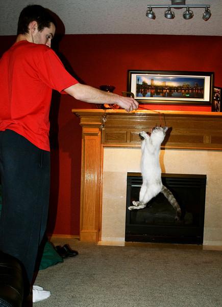 Katy the flying cat