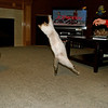Katy the flying cat
