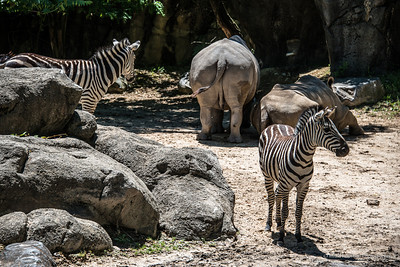 Zoo Animals-113