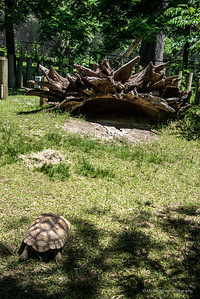 Zoo Animals-114