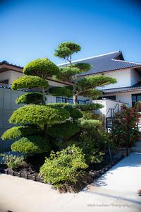 Morikami-2013 05 08-201