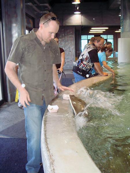 Brian feeding the rays.