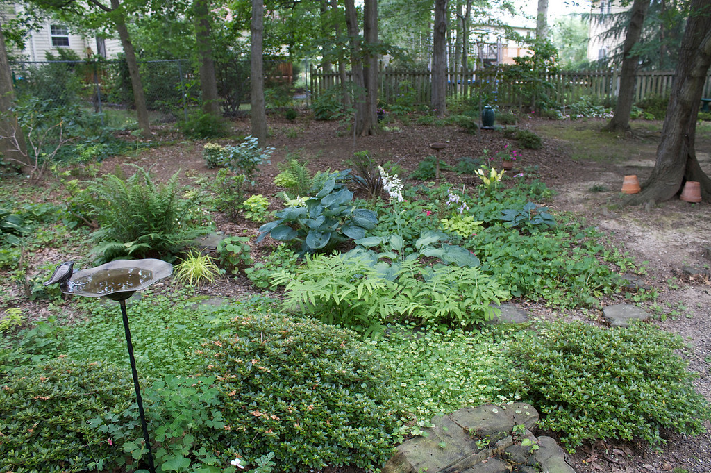 The backyard garden is sunchallenged but perfect for ferns