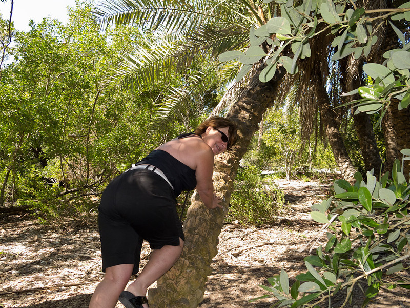 Martha scrambling up a palm tree to get some coconuts.