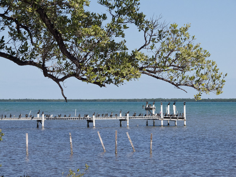 Cormorants resting on a dock overlooking Florida Bay on No Name Key