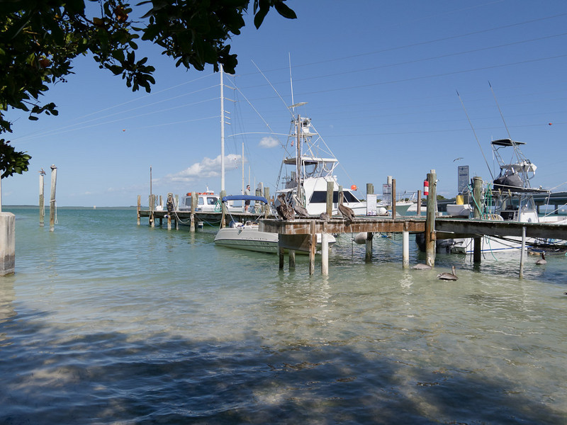 Robbies Marina in Islamorada.