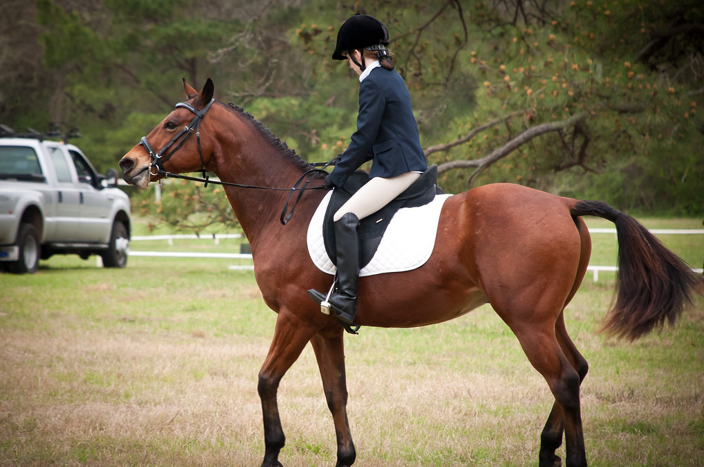 Marcie and Major At Pine Hill