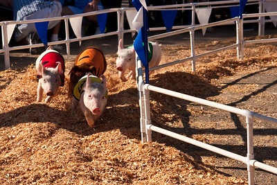 All Alaska Racing Pigs (1 of 1)