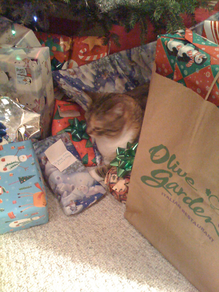 Mandy inspecting the presents.