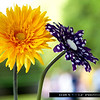 flowers2wm