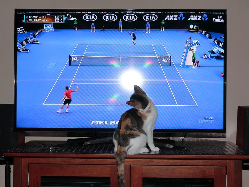 Amber watching tennis