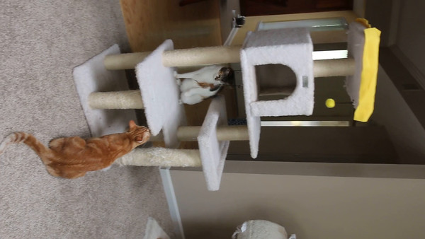 Keegan's Cat  Tree