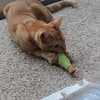 Amarii loves the new toy as you can see.  This video is relatively tame compared to what he usually does with it.