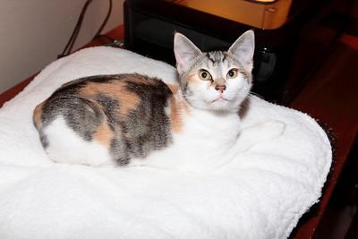 Kitten Pictures & Videos