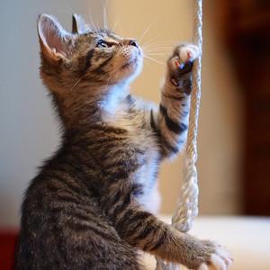 """Aslan. Guru's choice for gurushots.com theme """"Cats in Action"""""""