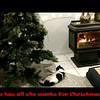 Content Christmas Kitty