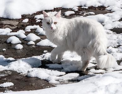 Kitty-4