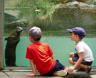Knoxville Zoo with Jackson and Mason