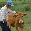 Tex greets one of the cows. Their cows are very well treated. Many of them act like they are just big pets.